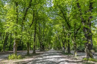 park Hvězda - stromořadí